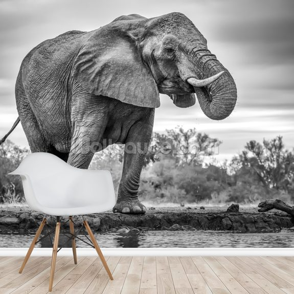 Elephant Black and White wall mural room setting