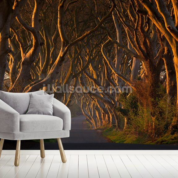 Tree Avenue mural wallpaper room setting