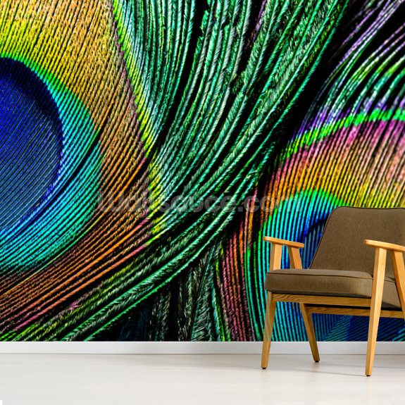 Peacock Feather Close Up Wallpaper Mural Wallsauce Us