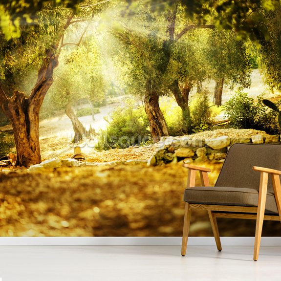 Olive Trees wallpaper mural room setting
