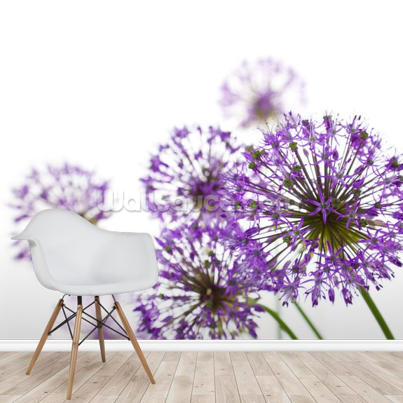Allium wallpaper mural room setting