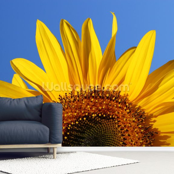 Sunflower Sunrise mural wallpaper room setting