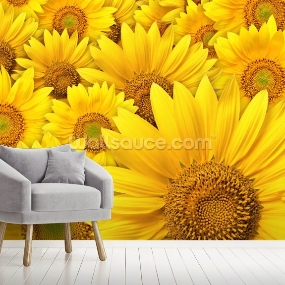 Sunflowers Bloom mural wallpaper room setting