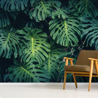Monstera Philodendron Leaves Wallpaper Wall Murals