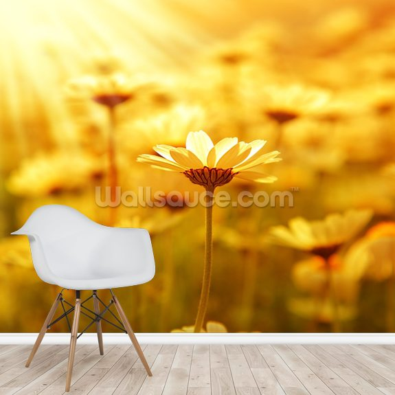 Field of Daisies wallpaper mural room setting