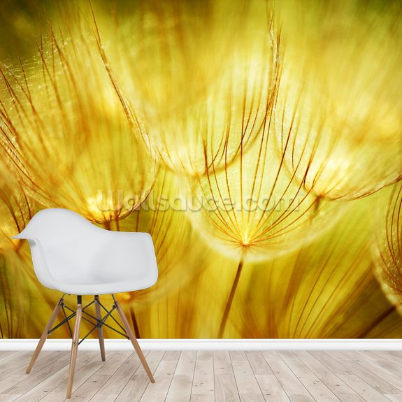 Soft Dandelion Flowers mural wallpaper room setting