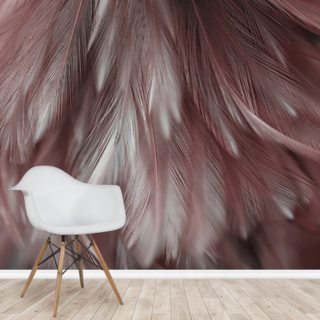 Ash Pink Feather Wallpaper Wall Murals