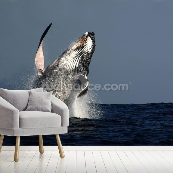 Humpback Whale Breaching wallpaper mural room setting