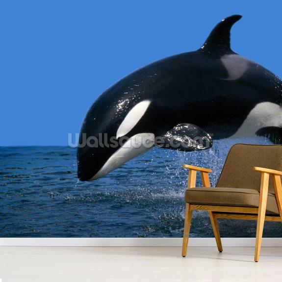 Stunning Orca Mural Wallpaper Room Setting