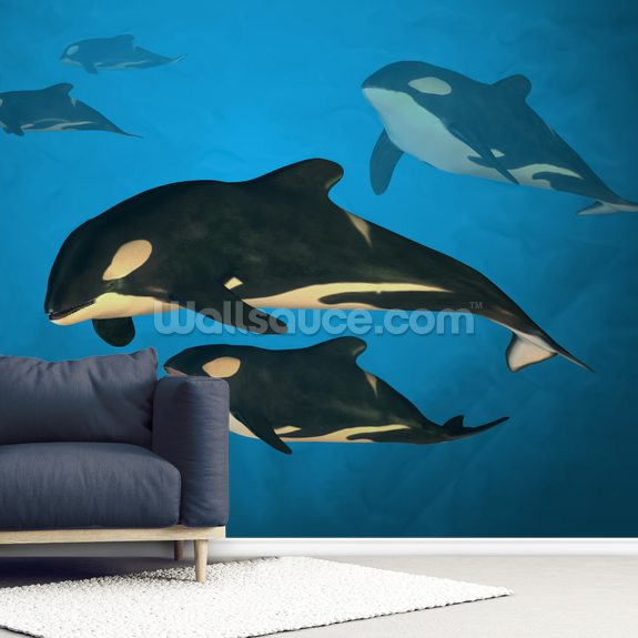Orca Family wallpaper mural room setting