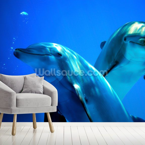 Curious Dolphins mural wallpaper room setting