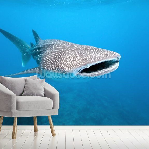 Whale Shark wallpaper mural room setting