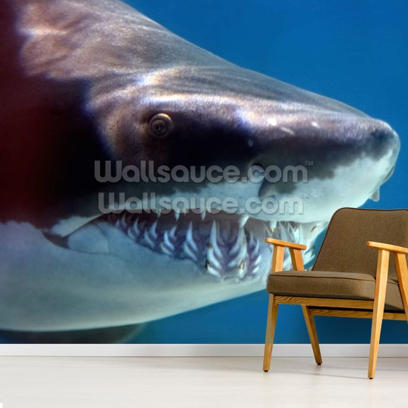 Shark Smile mural wallpaper room setting