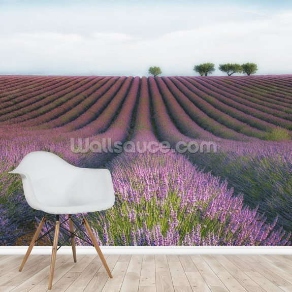 Velvet Lavender mural wallpaper room setting