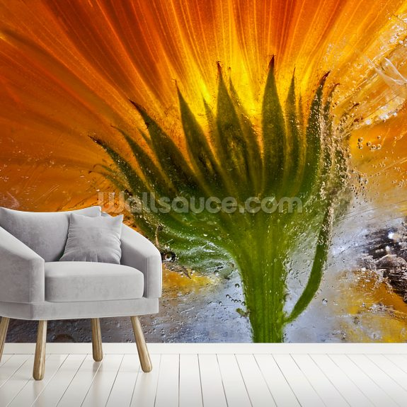 Frozen Marigold mural wallpaper room setting