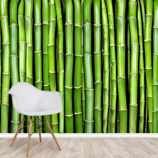 Bamboo Wallpaper Wall Murals
