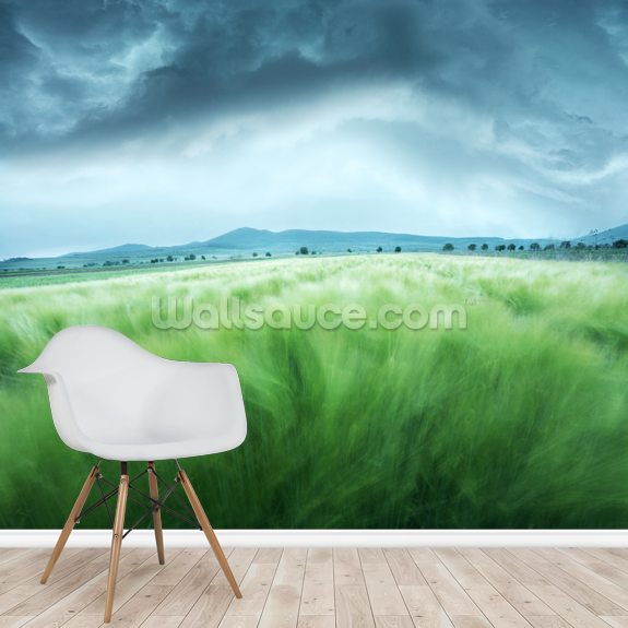 Barley Field mural wallpaper room setting