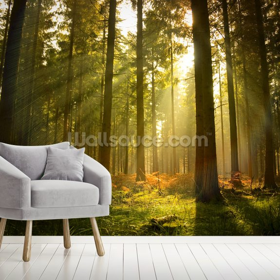 Beautiful Forest wall mural room setting