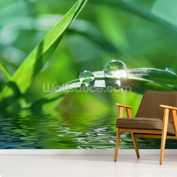 Water Droplet wallpaper mural room setting