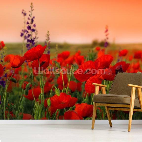 Field of Poppies wallpaper mural room setting
