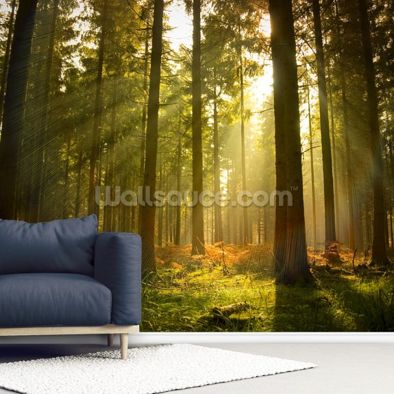 Beautiful Forest mural wallpaper room setting