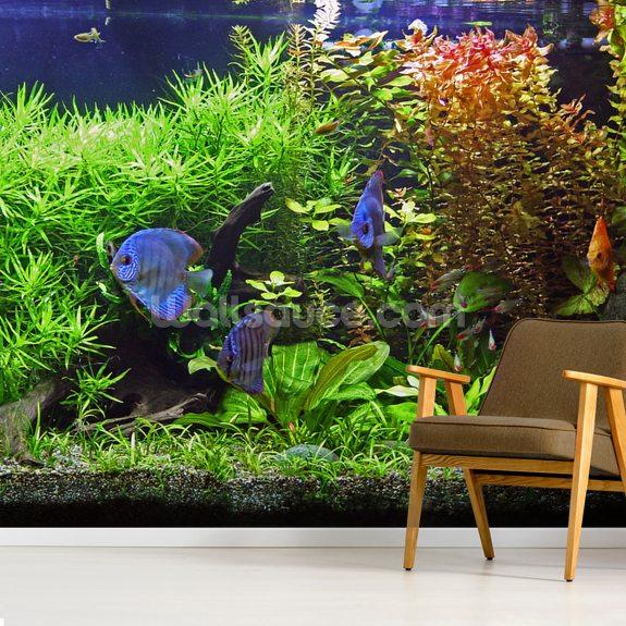 Aquarium With Discus Fish