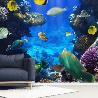 Coral Colony Wallpaper Wall Murals
