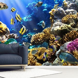Coral Life Wallpaper Wall Murals