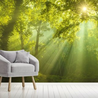 The Forest of Heaven Wallpaper Wall Murals