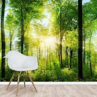 Forest Panoramic with Sunbeams