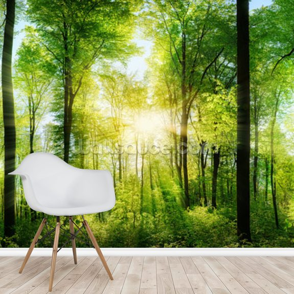 Forest Panoramic with Sunbeams wallpaper mural room setting