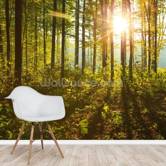 Forest Sunlight mural wallpaper room setting