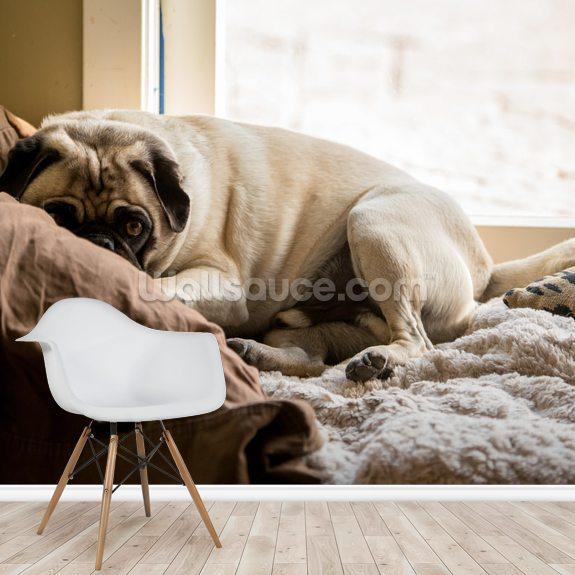 Cozy Pug mural wallpaper room setting