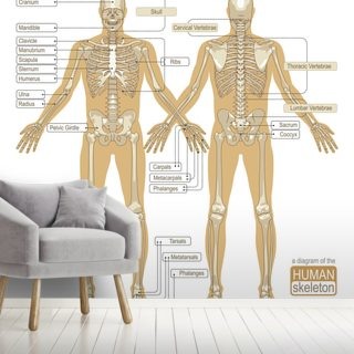 Diagram of the Human Skeleton Wallpaper Wall Murals