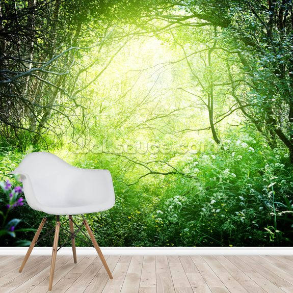 Deep Forest Light wall mural room setting