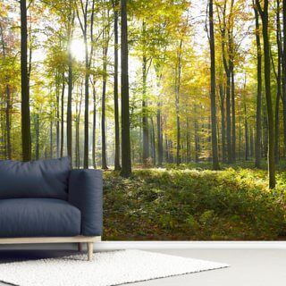 Sunny Forest Wallpaper Wall Murals