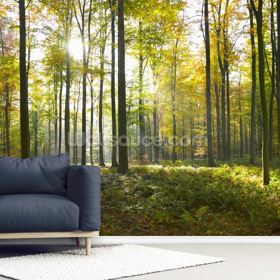 Sunny Forest wallpaper mural room setting