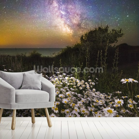 Daisies Under a Starlit Sky mural wallpaper room setting