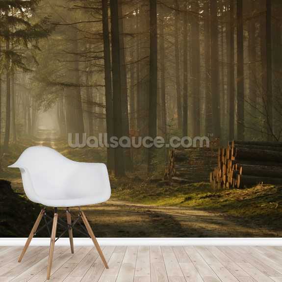 A Forest Walk wallpaper mural room setting
