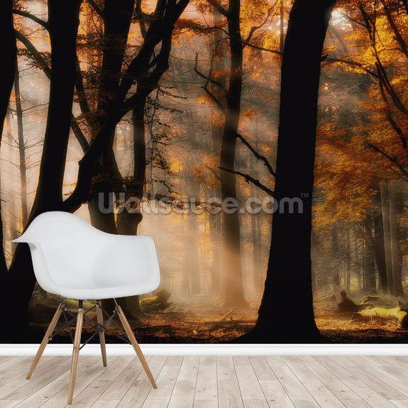 Autumn Light mural wallpaper room setting