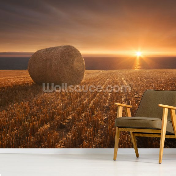 Gold Harvest mural wallpaper room setting