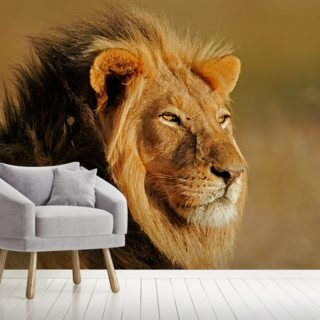 Lion Wallpaper Wall Murals