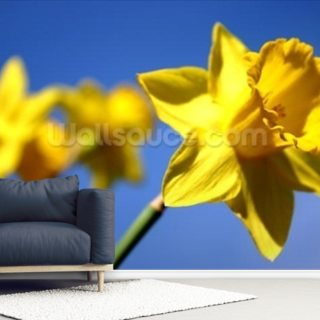 Daffodil Line (colour photo)