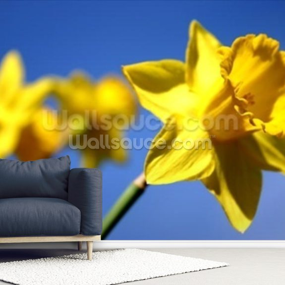 Daffodil Line (colour photo) mural wallpaper room setting