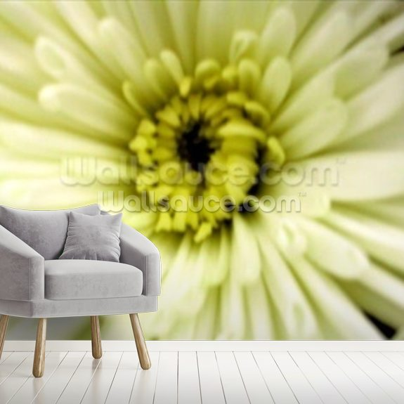 Birthday Flower (colour photo) wallpaper mural room setting