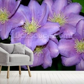 The Clematis Gang (colour photo)