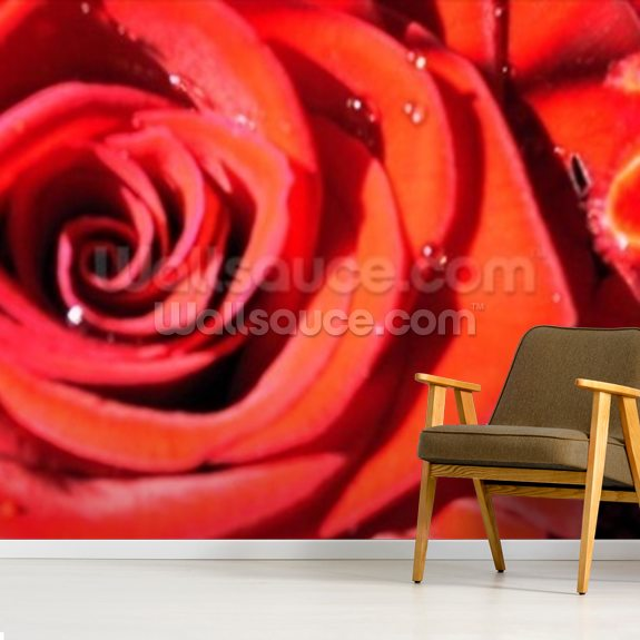 Valentines (colour photo) wallpaper mural room setting