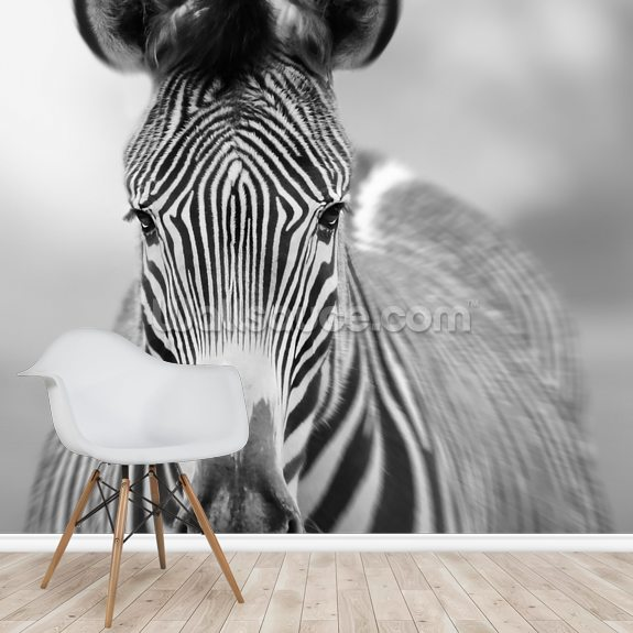 Zebra Pose mural wallpaper room setting