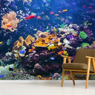 Colourful Fish & Coral Wallpaper Wall Murals