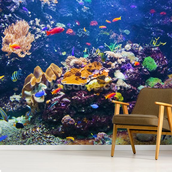 Colourful Fish & Coral mural wallpaper room setting